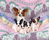 PUP 10 RK0031 13