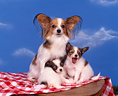 PUP 10 RK0034 06