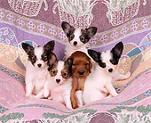 PUP 10 RK0036 03