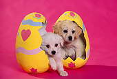 PUP 10 RK0048 03