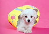 PUP 10 RK0049 05