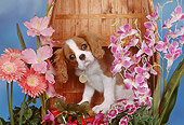 PUP 10 RK0094 03