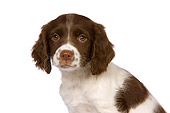 PUP 10 RK0098 01