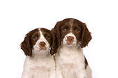 PUP 10 RK0099 01