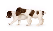 PUP 10 RK0101 01