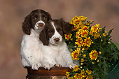 PUP 10 RK0103 01