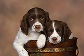 PUP 10 RK0104 01