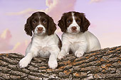 PUP 10 RK0105 01