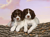 PUP 10 RK0106 01