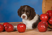 PUP 10 RK0109 01