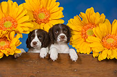 PUP 10 RK0111 01