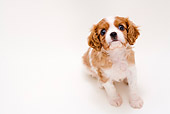 PUP 10 YT0004 01