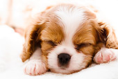 PUP 10 YT0007 01