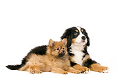 PUP 11 JE0004 01