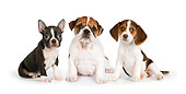 PUP 11 RK0158 01