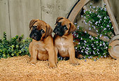 PUP 11 FA0001 01