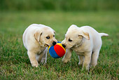 PUP 11 KH0009 01