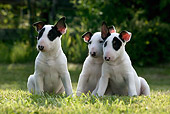 PUP 11 KH0010 01