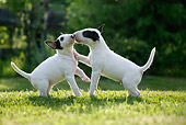 PUP 11 KH0012 01