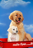 PUP 11 RK0009 02