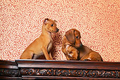PUP 11 RK0019 01