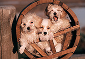 PUP 11 RK0043 03