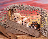 PUP 11 RK0049 07