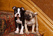 PUP 11 RK0060 01