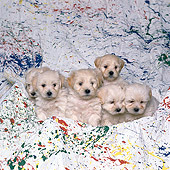 PUP 11 RK0063 03
