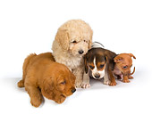 PUP 11 RK0101 01