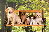 PUP 11 RK0114 01