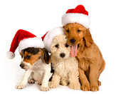 PUP 11 RK0129 01