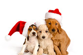 PUP 11 RK0130 01