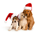 PUP 11 RK0131 01