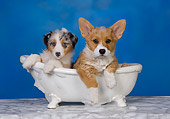 PUP 11 RK0151 01