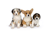 PUP 11 RK0152 01