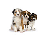 PUP 11 RK0153 01