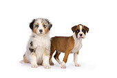 PUP 11 RK0155 01