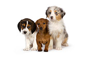PUP 11 RK0156 01