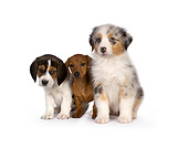 PUP 11 RK0157 01
