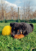 PUP 12 CB0001 01