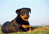 PUP 12 CB0002 01