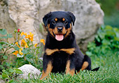 PUP 12 CB0006 01