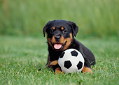 PUP 12 CB0008 01
