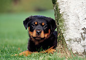 PUP 12 CB0009 01