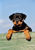 PUP 12 CB0011 01