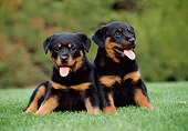 PUP 12 CB0012 01