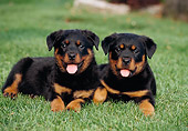 PUP 12 CB0013 01