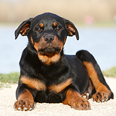PUP 12 CB0015 01