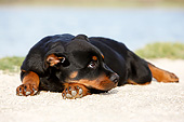 PUP 12 CB0016 01